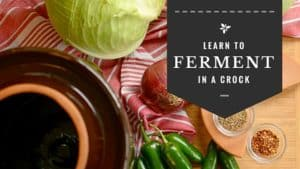 Learn to ferment in a crock with 7 easy steps. | makesauerkraut.com