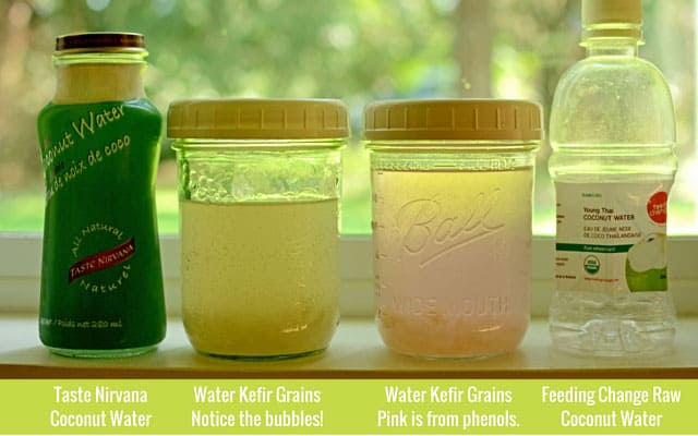 Fermenting coconut water in a range of colors with water kefir grains. | makesauerkraut.com