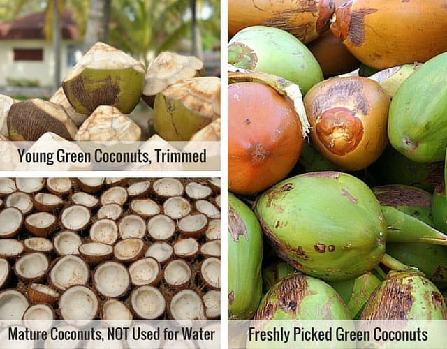 Coconuts used for coconut water. | makesauerkraut.com