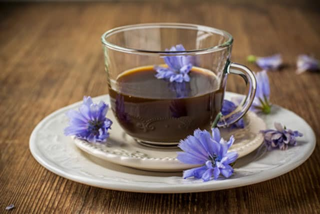Chicory tea is rich in prebiotics. | makesauerkraut.com