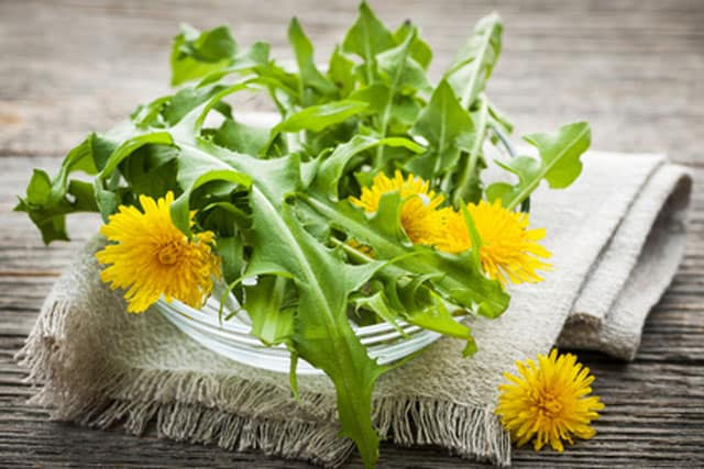In spring, enjoy dandelion greens and prebiotics. | makesauerkraut.com