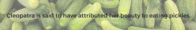 Fun facts about pickles. 4 | makesauerkraut.com