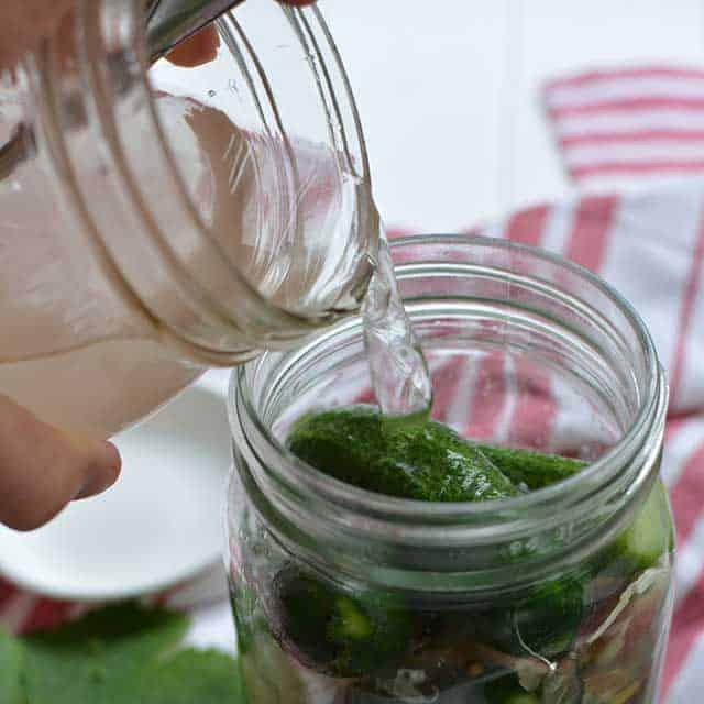 Fermented pickles recipe covering with brine. | makesauerkraut.com