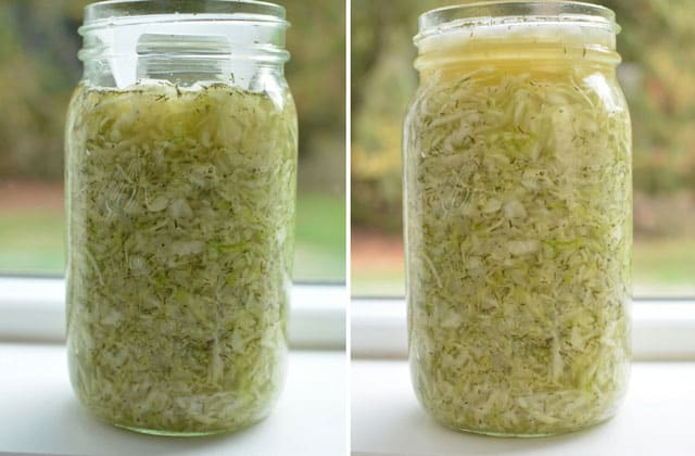 Fermented sauerkraut with the ViscoDisc. | makesauerkraut.com