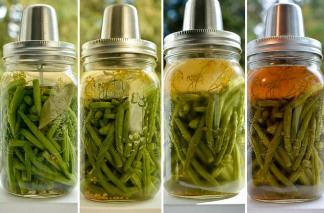Color changes with fermented green beans using the Kraut Source fermentation lid. | makesauerkraut.com