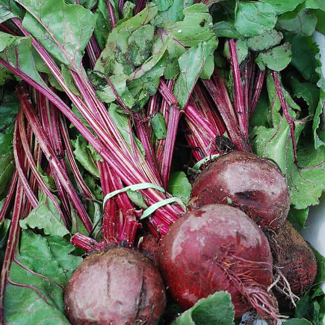 Fresh beets with the tops still on make the best fermented beets. | makesauerkraut.com