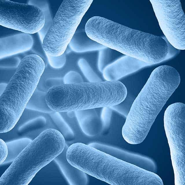 Probiotics in sauerkraut. | makesauerkraut.com