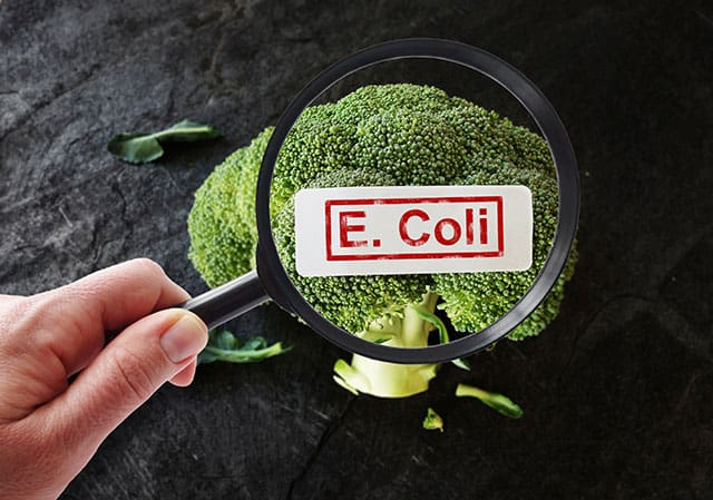 Is there E. coli in sauerkraut? | makesauerkraut.com