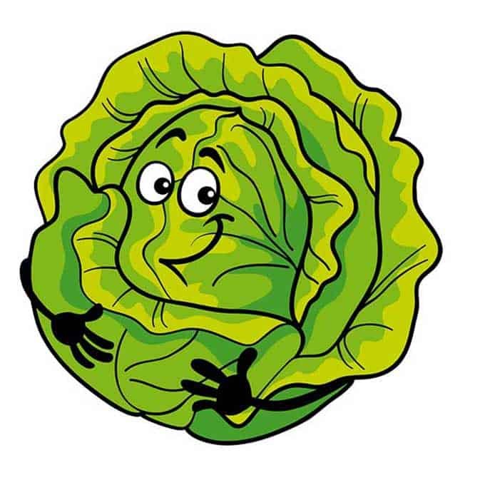 Sauerkraut Fun Facts: A Few Cabbage Jokes - makesauerkraut.com
