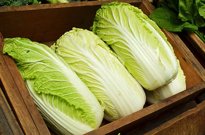 Stocking your kimchi pantry: Napa cabbage. | MakeSauerkraut.com
