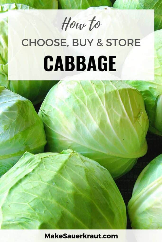 Heads of Cabbages (How To Choose, Buy and Store Cabbage)