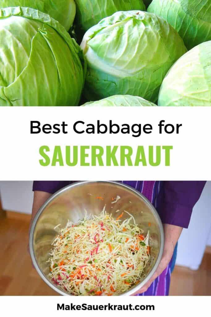 Best Cabbage for Sauerkraut