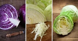 Three pictures of cabbage: red, winter and summer. | MakeSauerkraut.com