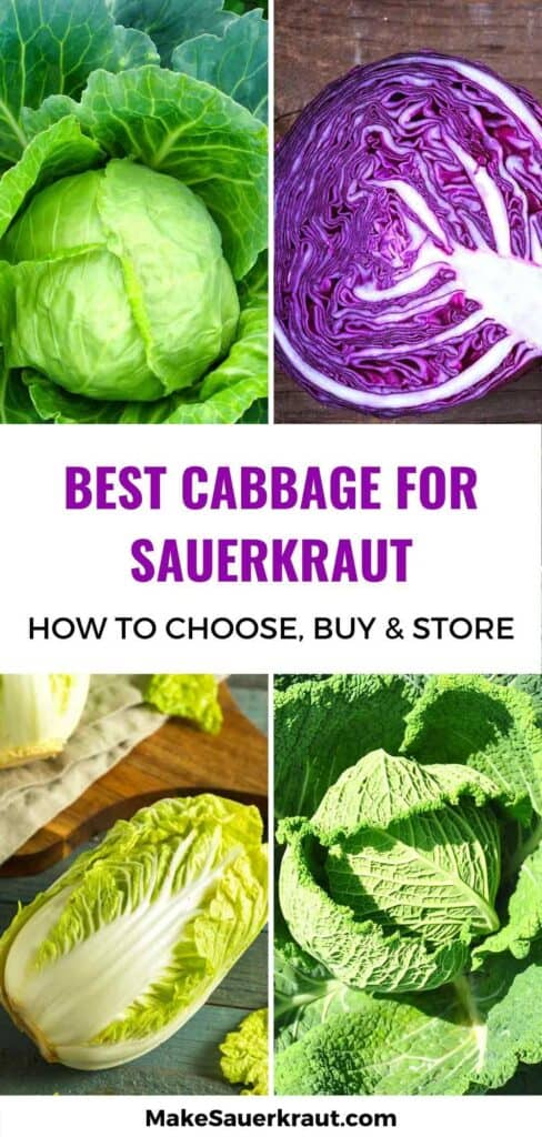 Best type of cabbage for sauerkraut: Green, Red or Purple, Napa, or Savoy