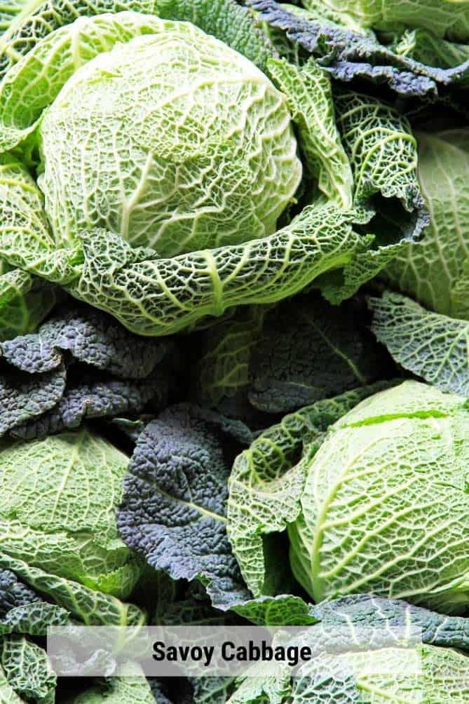 Heads of savoy cabbage in a pile. | MakeSauerkraut.com