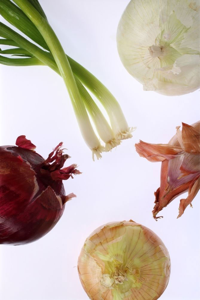 Different types of onions and string onions against white background. | MakeSauerkraut.com